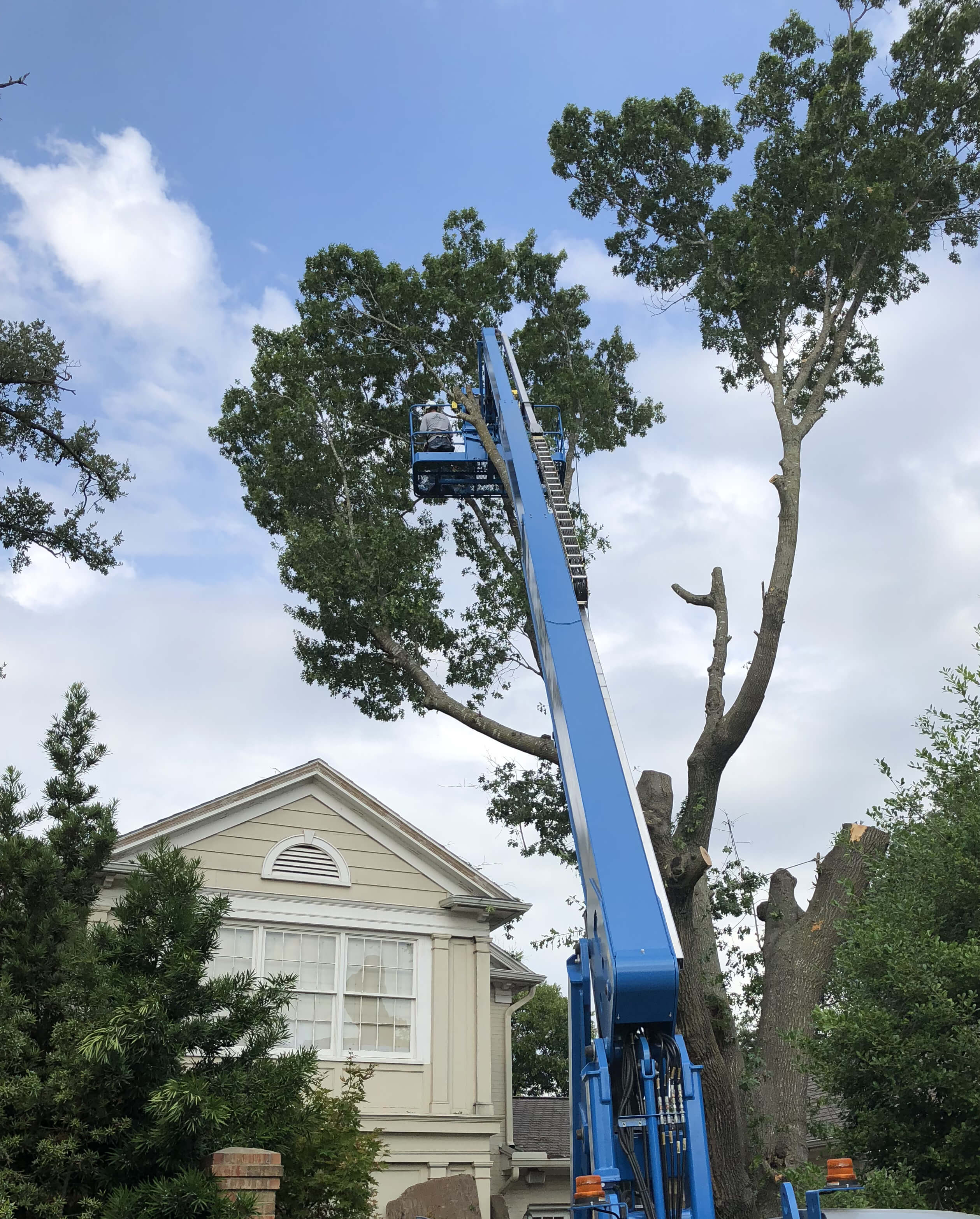 Tree trimming and tree removal services in Waco
