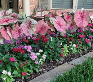 Residential Landscaping Flower and Shrubs Plantings